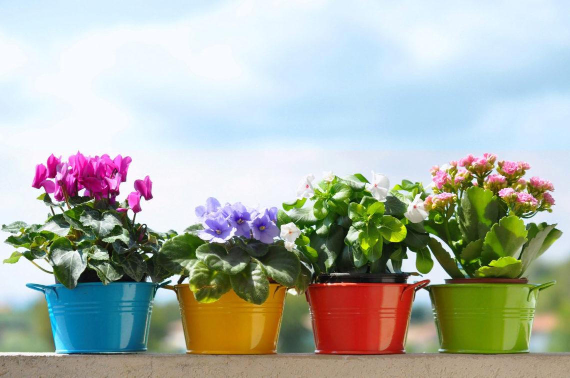 Какие комнатные растения нельзя выращивать в квартире?