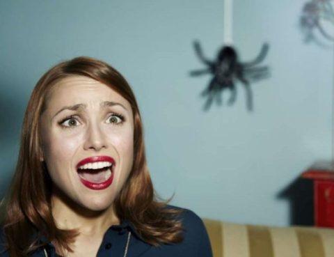 увидеть паука примета